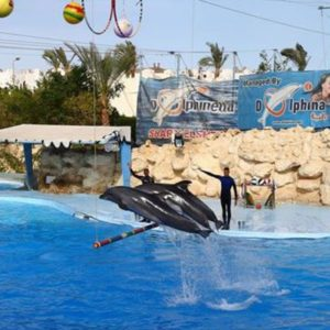 Delfinariy_Dolphinella_v_Sharm-el-Sheyhe_2