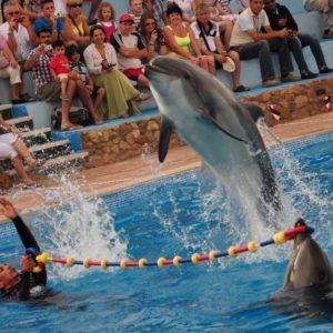 delfinarij-sharm-ehl-shejh-otzyvy