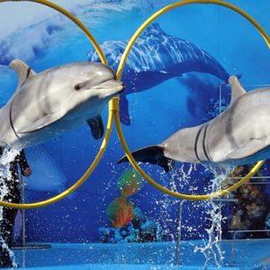 dolphin_Egypt
