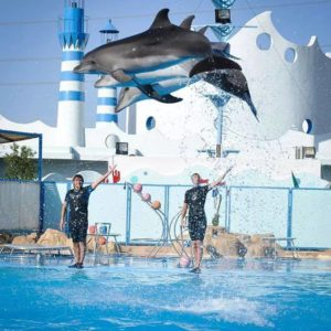 dolphins-show-hurghada