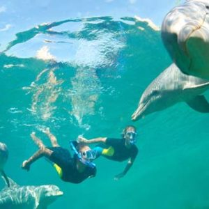 excursions-to-swim-with-dolphins
