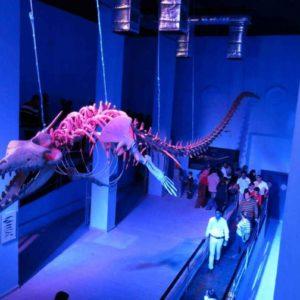 wall_shark_hurghada_grand_aquarium
