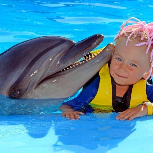 delfinarij-v-sharm-ehl-shejhe